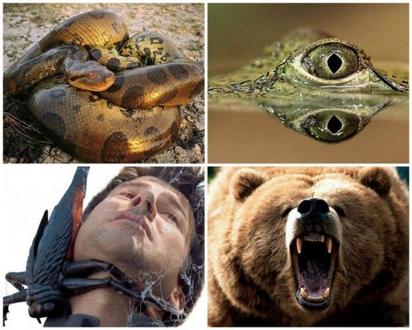 Животные, которые могут тебя съесть