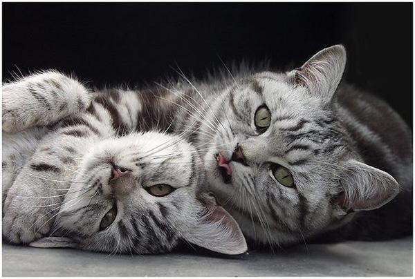 Эти удивительные существа - кошки